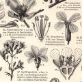 Pflanzensystematik