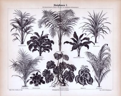 Blattpflanzen I. ca. 1885 Original der Zeit