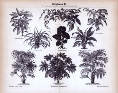 Blattpflanzen II. ca. 1885 Original der Zeit