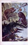 Chamäleon ca. 1885 Original der Zeit