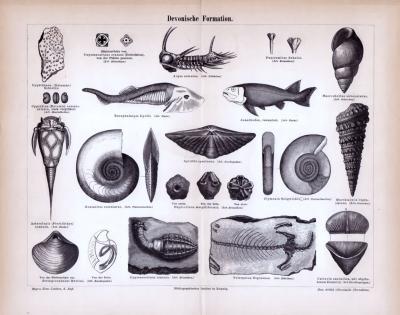 Devonische Formation ca. 1885 Original der Zeit
