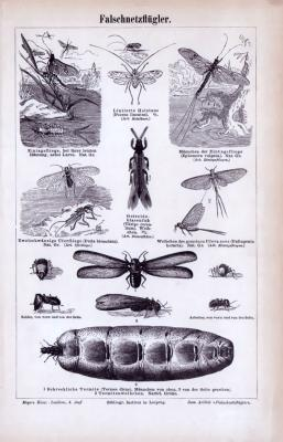 Falschnetzflügler ca. 1885 Original der Zeit