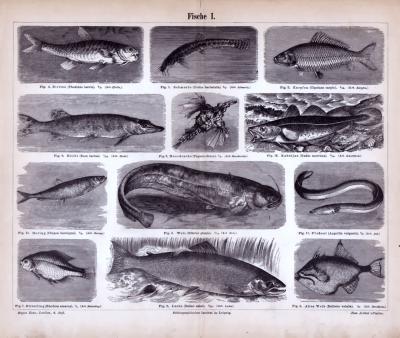 Fische I. ca. 1885 Original der Zeit
