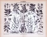 Stich aus 1885 zeigt 10 verschiedene Gewürzpflanzen.