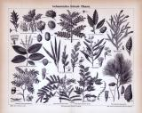 Stich aus 1885 zeigt 11 Pflanzen die nutzwirtschaftliches Gerbmaterial liefern.