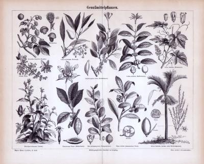 Stich aus dem Jahr 1885 zeigt Genußmittelpflanzen und deren Blüten und Früchte.