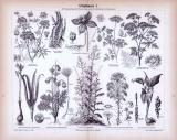 Stich aus 1893 zeigt 9 verschiedene Giftpflanzensorten.