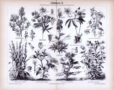 Stich aus 1885 zeigt 9 verschiedene Giftpflanzensorten.