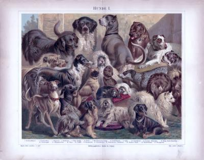 Chromolithographie aus 1885 zeigt 21 verschiedene Hundearten.