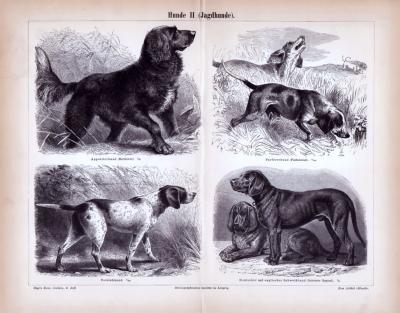 Stich aus 1885 zeigt 4  verschiedene Hundearten.