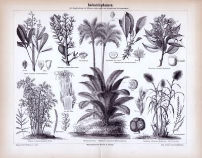 Stich aus 1885 zeigt 8 Sorten von Industriepflanzen inklusive lateinischer Gattungsnamen.