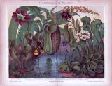 Chromolithographie aus 1885 zeigt 10 insektenfressende...