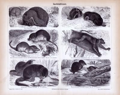 Stich aus 1885 zeigt verschiedene insektenfressende Tierarten.