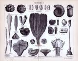 Stich aus 1885 zeigt verschienede Versteinerungen aus dem erdzeitlichen Alter der Juraformation.