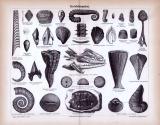 Stich aus 1885 zeigt verschiedene Versteinerungen aus der erdzeitlichen Kreideformation.