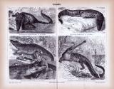 Stich aus 1885 zeigt verschiedene Krokodilarten.