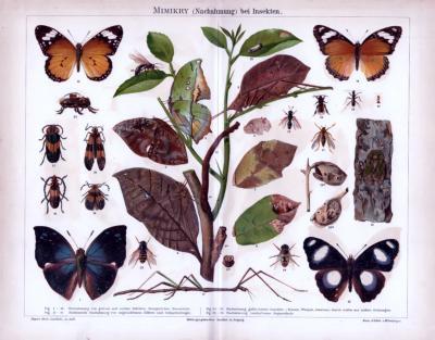Chromolithographie aus 1885 zeigt Insekten und deren Nachahmungsstrategien.