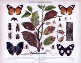 Chromolithographie aus 1885 zeigt Insekten und deren...