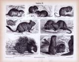 Stiche aus 1885 zeigen verschiedene Nagetiere in natürlicher Umgebung.
