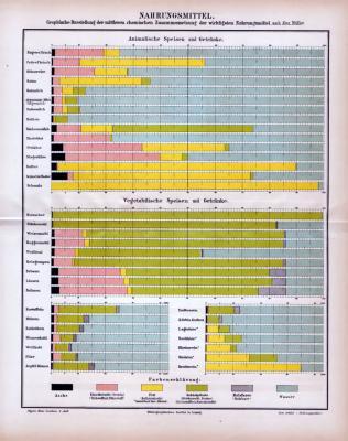 Farbige Lithographie aus 1885 zeigt in Nahrungsmittel und deren chemische Zusammensetzung.
