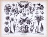 Stich aus 1885 zeigt verschiedene Nahrungspflanzen.