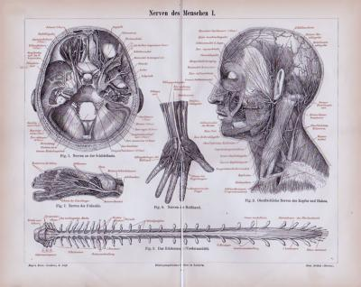 Stich aus 1885 mit medizinischen Skizzen zu den Nerven des Menschen.