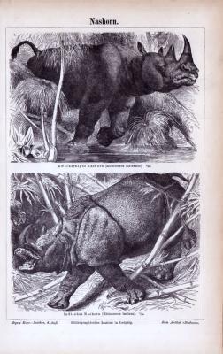 Stich aus 1885 zeigt Doppelnashorn und Indisches Nashorn in Naturszenerie.
