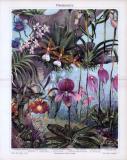 Chromolithographie aus 1885 zeigt 10 verschiedene Arten von Orchideen.