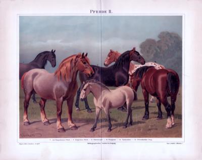 Chromolithographie aus 1885 zeigt 6 verschiedene Pferderassen.