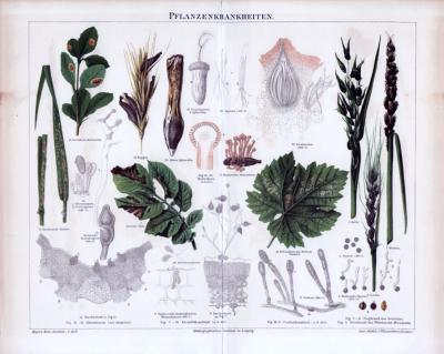 Chromolithographie aus 1885 zeigt verschiedene Pflanzenkrankenheiten.