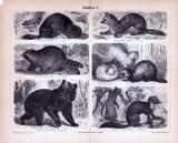 Stiche aus 1885 zeigen verschiedene Arten von Raubtieren...