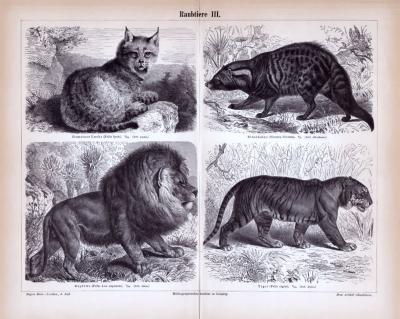 Stiche aus 1885 zeigt 4 Arten von Raubtieren in natürlicher Umgebung.