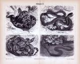 Stich aus 1885 zeigt verschiedene Arten von Schlangen.