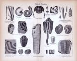 Stich aus 1885 zeigt verschiedene Fossilien aus der silurischen Formation.