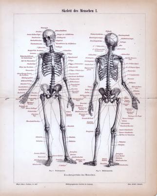 Stich aus 1885 zeigt das menschliche Skelett und seine medizinischen Bezeichnungen.