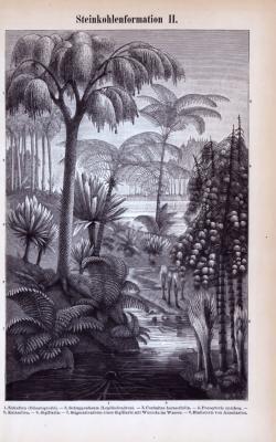 Stich aus 1885 zeigt eine Landschaft aus der erdzeitlichen Formation der Steinkohlzezeit.