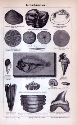 Stiche aus 1885 zur erdgeschichtlichen Zeit des Tertiär.