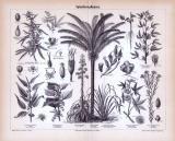 Stich aus 1885 zeigt Spinnfaserpflanzen und deren Früchte, Blüten und Samen.