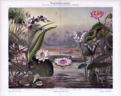 Chromolithographie aus 1885 zeigt verschiedene Wasserpflanzen in einer Szenereie an einem See.