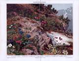 Die Chromolithographie von 1893 zeigt 16 verschiedene...