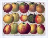 Die Chromolithographie von 1893 zeigt 15 verschiedene Apfelsorten nach dem System von Diel-Lucas.