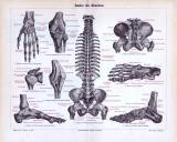Historischer Stich über das medizinische Thema Bänder des...