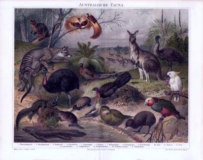 Chromolithographie mit 17 Tieren der Fauna Australiens aus dem Jahr 1893.