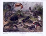 Chromolithographie mit 17 Tieren der Fauna Australiens...