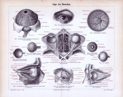 Zweifarbiger Historischer Stich aus dem Jahr 1893 zum medizinischen Thema Auge des Menschen.