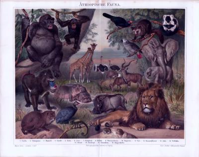 Chromolithographie zum Thema Äthiopische Fauna aus dem Jahr 1893. Es weden 18 verschiedene regional heimische Tiere dargestellt.