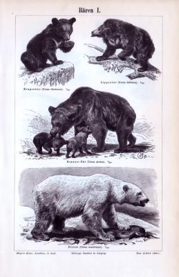 Stich aus  1893 zum Thema Bären. Hier abgebildet in einzelnen Szenen sind Kragenbär, Lippenbär, Braunbär und Eisbär. Die Rückseite zeigt einen Stich mit Waschbär, Panda, Weißrüsselbär sowie Binturong in 4 einzelnen Szenen.