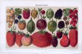 Chromolithographie zum Thema Beerenobst aus 1893. Abgebildet sind 22 verschiedene Beerenobstsorten.