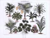 Chromolithographie aus 1893 zum Thema Blattpflanzen. Abgebildet werden 10 verschiedene Pflanzen inklusive der lateinischen Gattungsnamen.