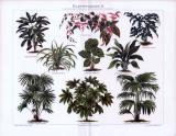 Farbige Chromolithographie aus 1893 mit Abbildungen von 9...